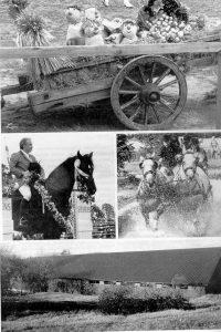 historia_kuvakooste_creinokivisto